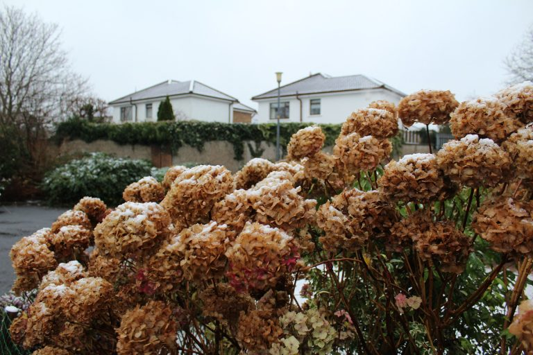 garten winterfest stauden