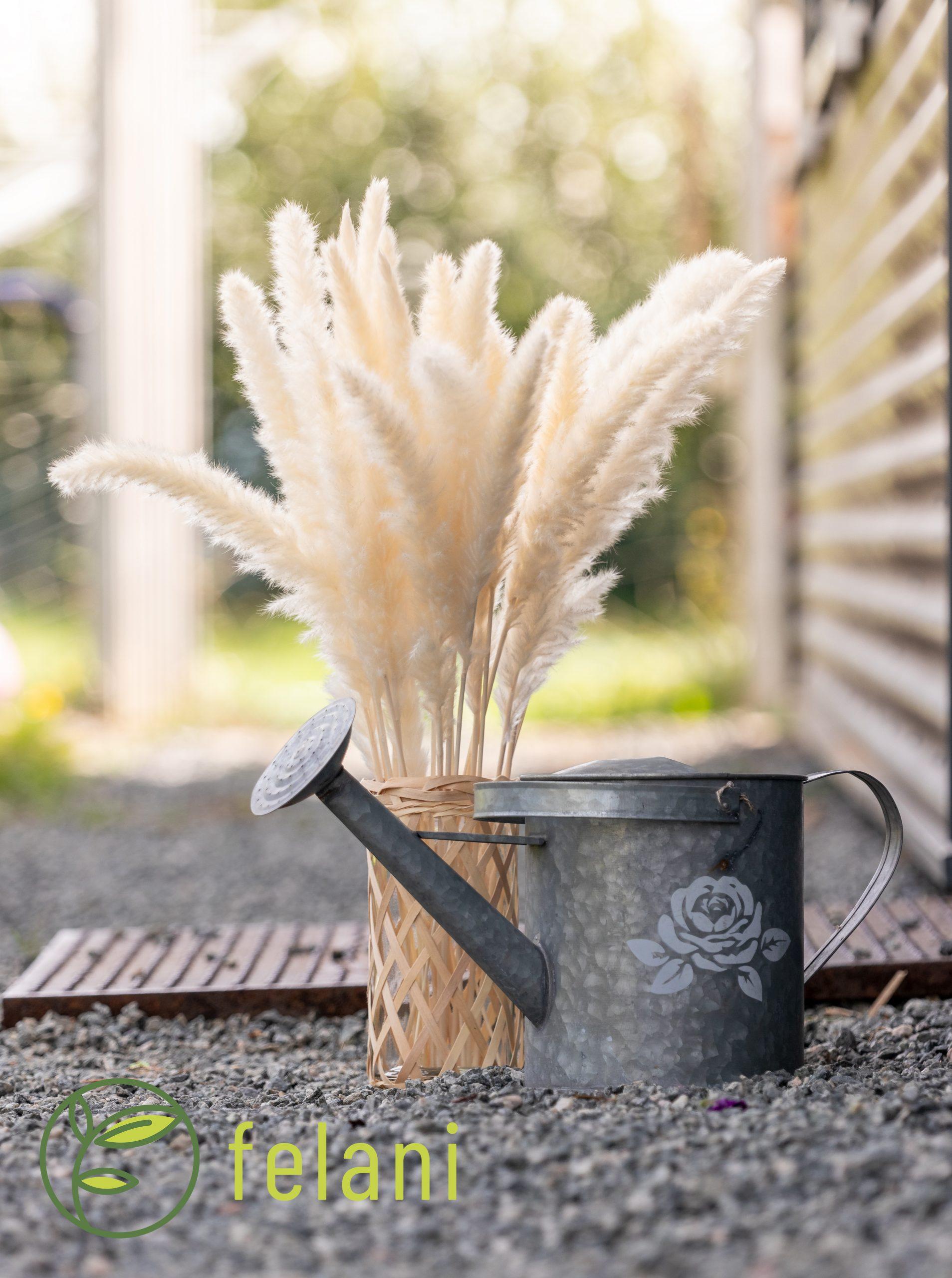 getrocknetes Pampasgras Trockenblumen Deko