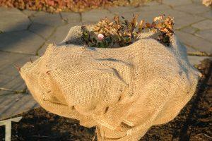 rosen.vlies garten winterfest