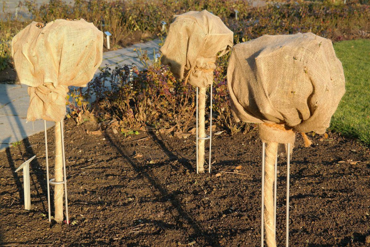 pflanzen.winterschutz gartenarbeit winterfest
