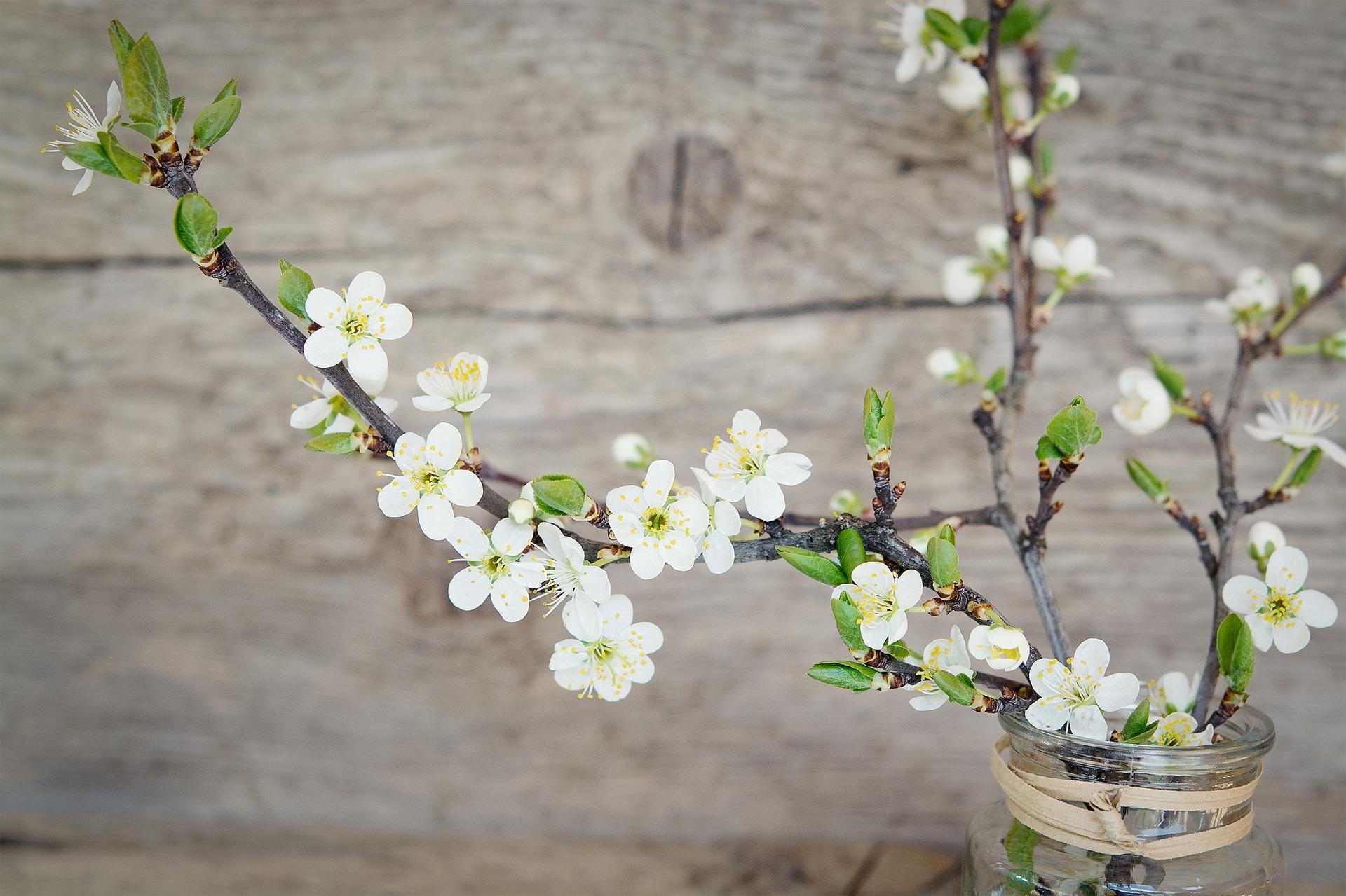 Kirschblütenzweige Naturdeko