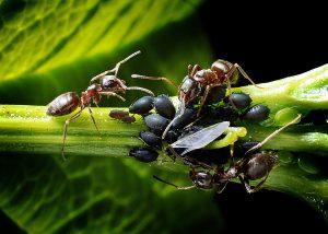 pestizide Biologischer Pflanzenschutz neemöl