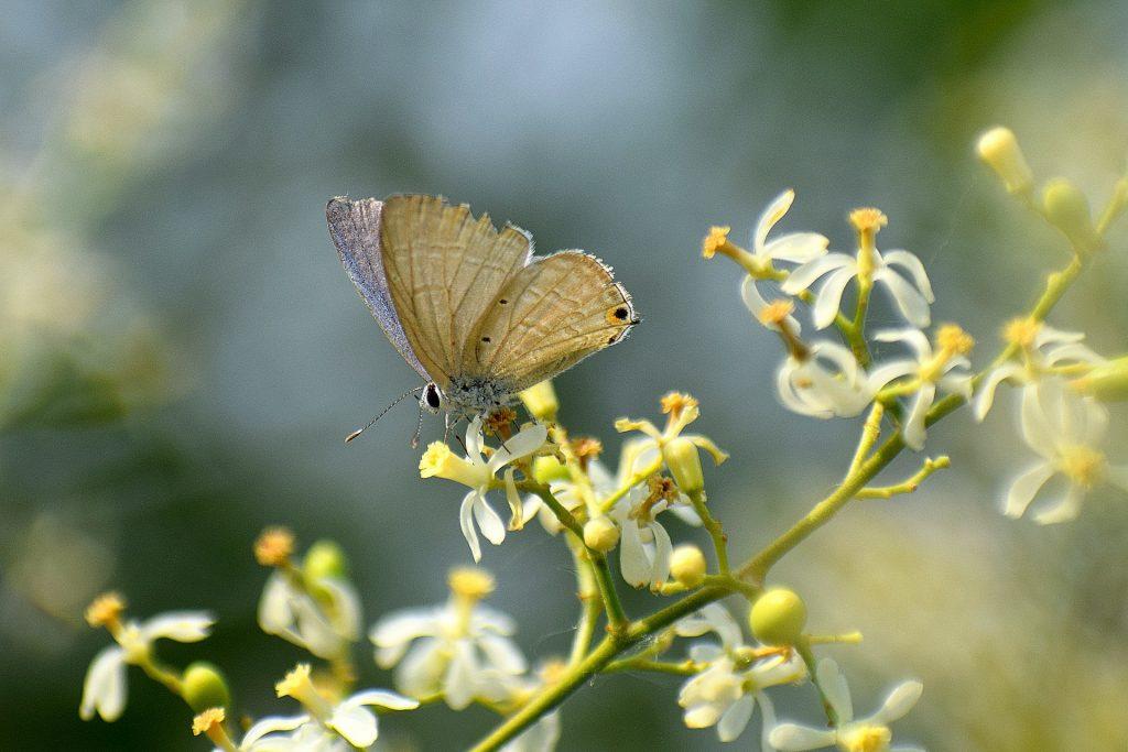 pestizide Biologischer Pflanzenschutz im Garten selber machen neemöl