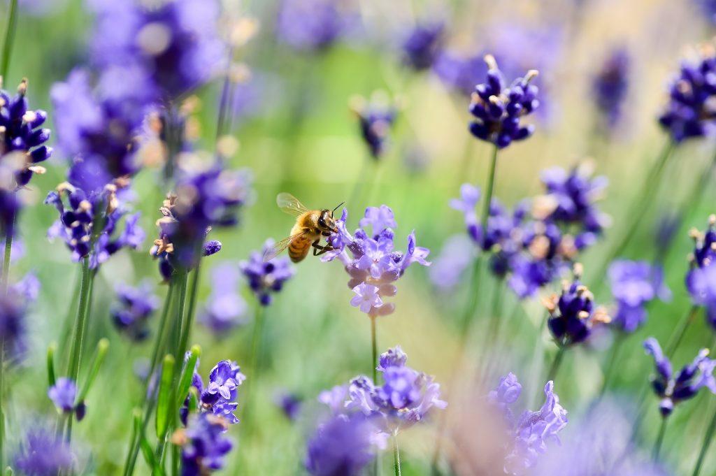 natürlicher Pflanzenschutz Neemöl pestizide